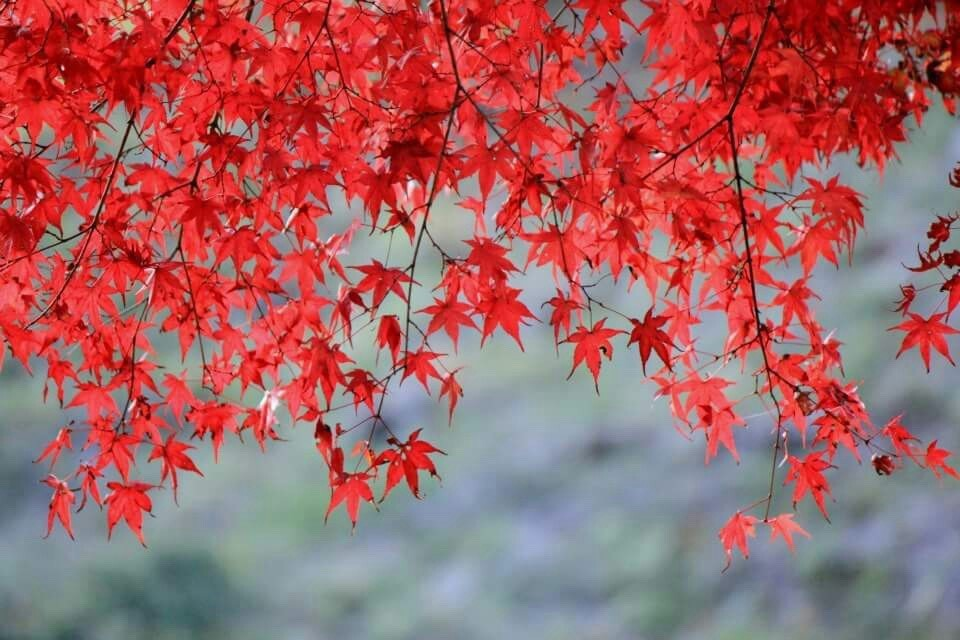 Autumn Leaves <br/> and a Short Hike at <br/> Mt. Takao