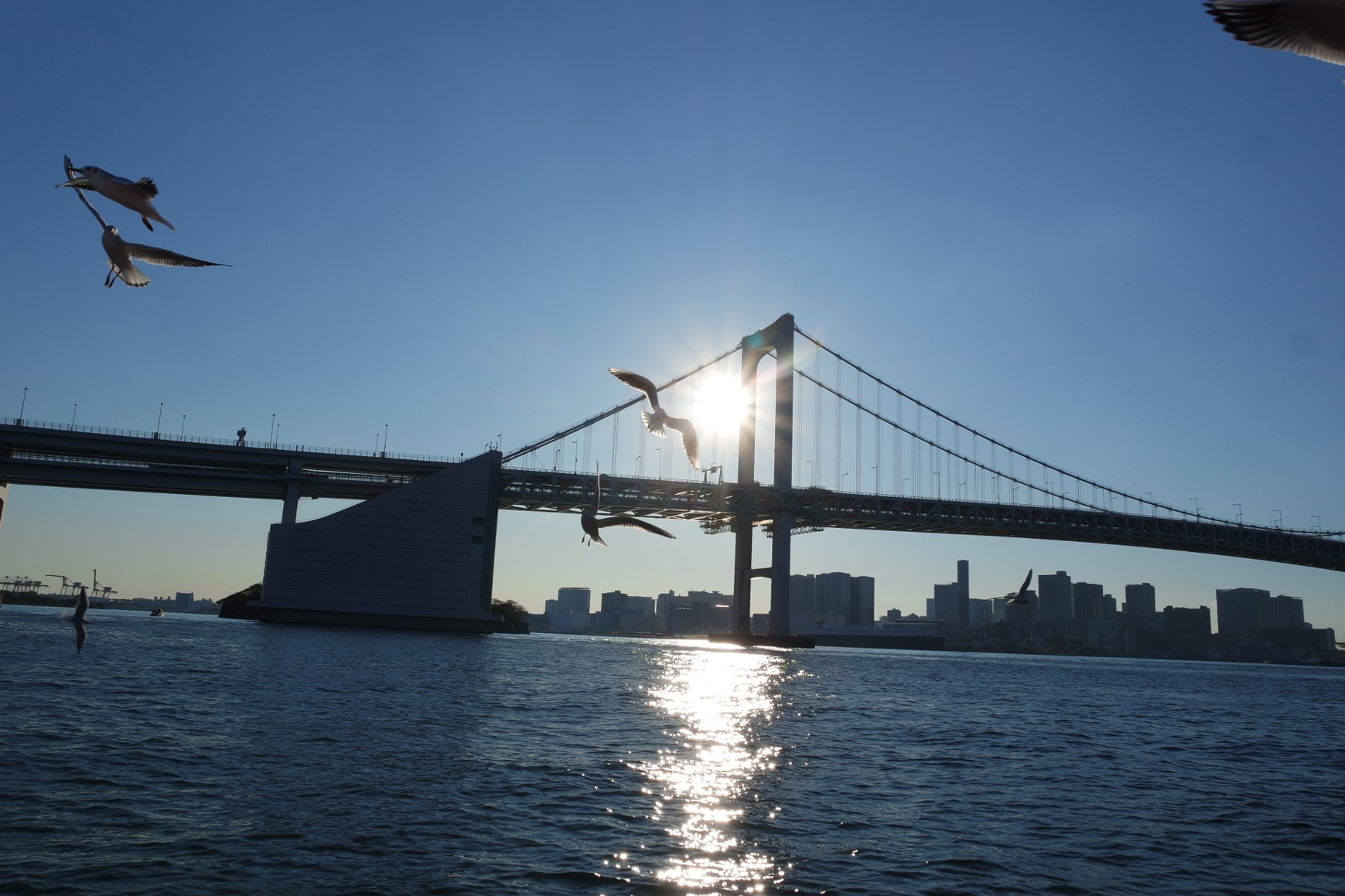 Ride the SKY Bus to see Tokyo by Bus and Boat at the same time!
